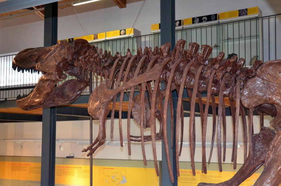 Museo dei PaleoAmbienti Sulcitani.jpg